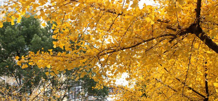 诗歌|我爱俳句——初冬风景