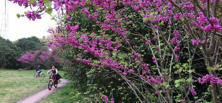 诗歌 | 我爱俳句——春夏美景