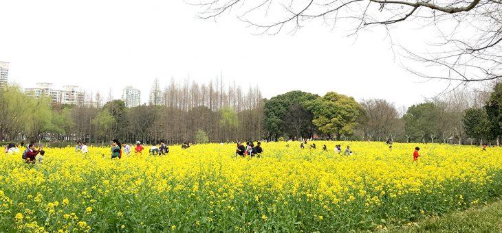 散文 | 野性的春天